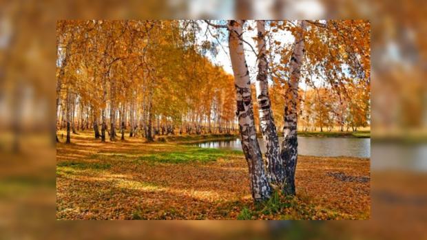 Погода в чаплыгин краснодарский край