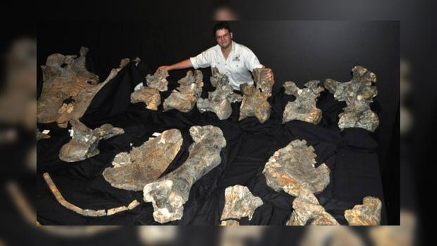ВАвстралии обнаружили новый вид исполинских динозавров