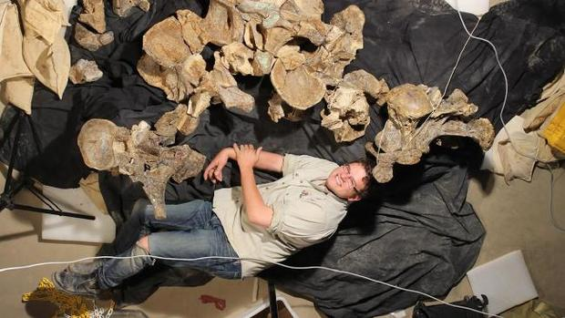 ВАвстралии найдены останки огромных динозавров