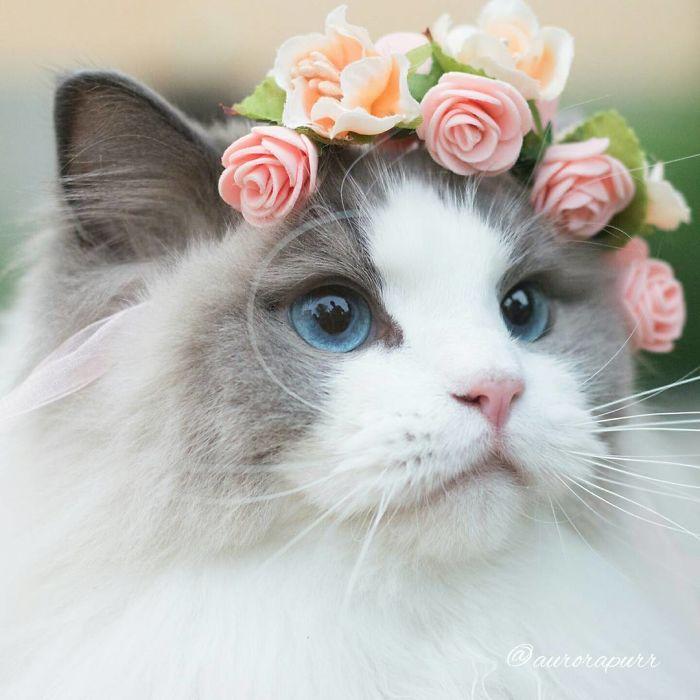 кошки фото красивые