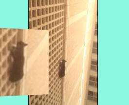 Трогательное видео: спасение кота от падения с 7-го этажа