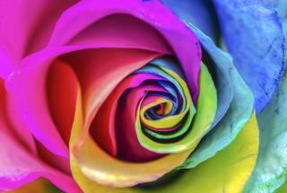 Сочетание цветов, которые принесут в жизнь положительные эмоции