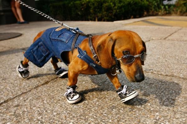 Картинки по запросу когда твой собака