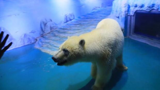 Самый невеселый медведь вмире переехал вкитайский океанариум