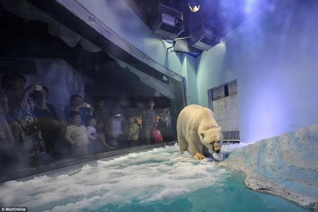 Живущему в КНР самому грустному медведю вмире дозволят увидеть солнце