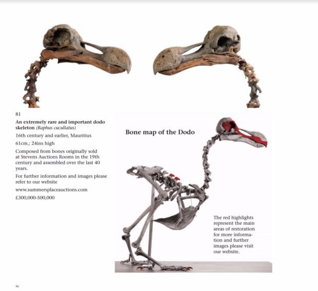 Скелет вымершей птицы додо продадут нааукционе наБританских островах