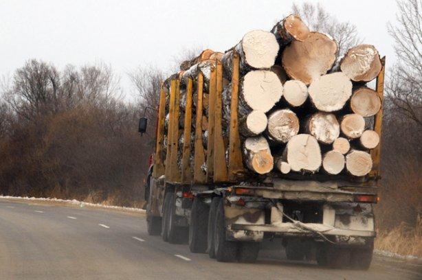 Ляшко: Повешу насосне того, кто отменит мораторий наэкспорт леса