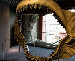 В Мексике обнаружили гигантского 18-метрового предка современных акул