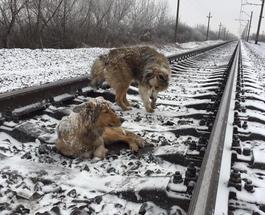 В Ужгороде пес Панда 48 часов самоотверженно охранял раненую собаку Люси