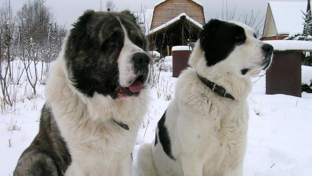 Живодеры тащили пса замашиной напривязи вТульской области