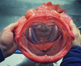 Морские чудовища: реальные обитатели морей поражают воображение