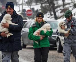 Невероятно, но факт: три щенка выжили под снежной лавиной в итальянском отеле – опубликовано видео