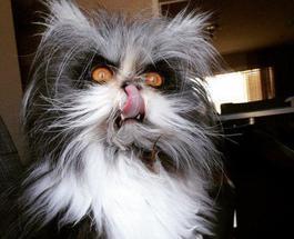 Забавные животные: смешные коты способны сделать день ярче