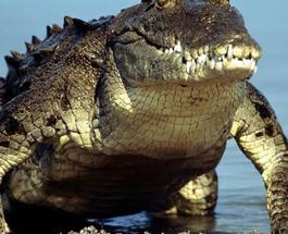 Тайна главного зверинца РФ: в московском зоопарке обнаружили крокодила Гитлера