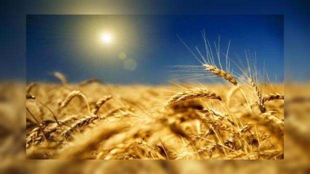 Украина установила рекорд поэкспорту зерна