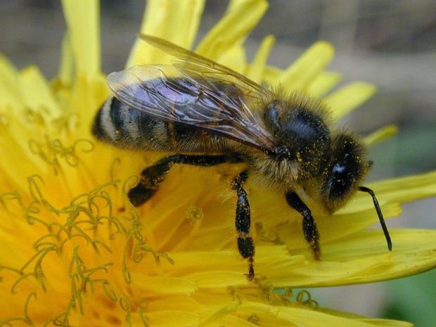 Руководитель администрации Белорецкой области пообещал трудоустроить 108 млн пчёл