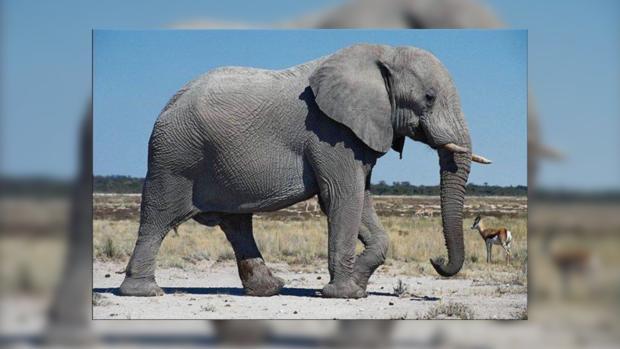 Зоологи узнали, какое животное является самым заботливым вмире