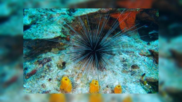 Дальневосточные ученые обнаружили сотни новых морских организмов