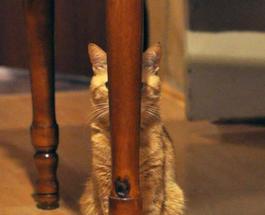 Фото котов, которые неумело играют в прятки