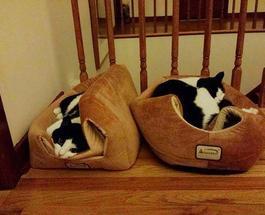 Фото котов, обладающих железной логикой