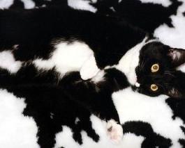 Фото котов, которые бьют рекорды маскировки