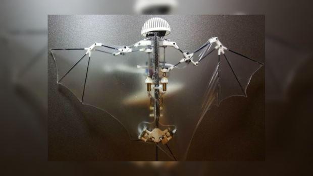 Учёные создали робота-летучую мышь