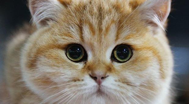 Кот лишил электричества две тысячи человек вКарелии
