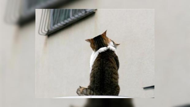 Киевсовет проголосовал запетицию опризнании котов частью экосистемы города