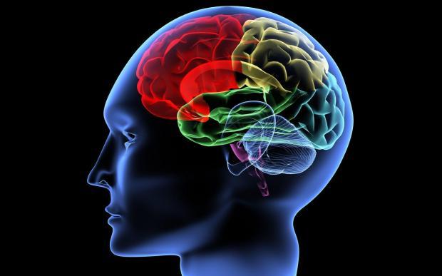 Ученые: мозг может самостоятельно вырабатывать сахар