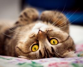 Забавные коты поздравляют женщин с 8 Марта