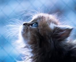 Забавные фото животных: умилительная кошечка заставит вас улыбнуться