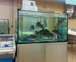 Рыбалка по-мелитопольски: житель Запорожья на спор искупался в аквариуме супермаркета