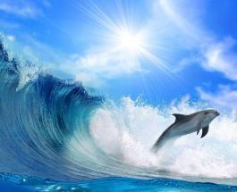 """Понаехали тут: дельфин не дал серферу покататься на волнах в """"своем океане"""" - смешное видео"""