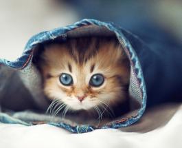 Невероятно, но факт: в США выпустили духи с ароматом котят