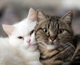 Видео про котов, способных рассмешить любого