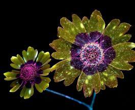 Это надо видеть: невероятные светящиеся цветы на снимках американского фотографа