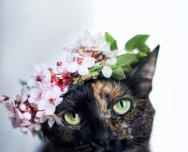 Фото котов, встречающих весну