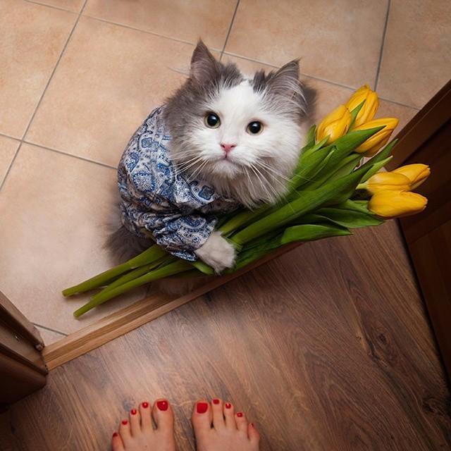 Смешные поздравления от котов 555