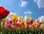 Куда поехать на майские праздники: лучшие места в Украине