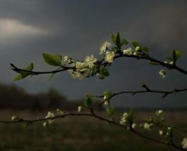 Гисметео: погода в Украине на 7 апреля