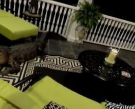 Трехметровый аллигатор напал на семью в Пасхальное воскресенье