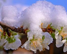Гисметео: погода в Украине 21 апреля будет дождливой и снежной