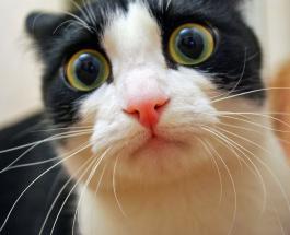 Видео про котов – микс смеха от пушистых любимцев