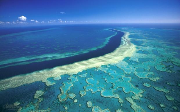 Большой Барьерный риф: спасти, пока непоздно