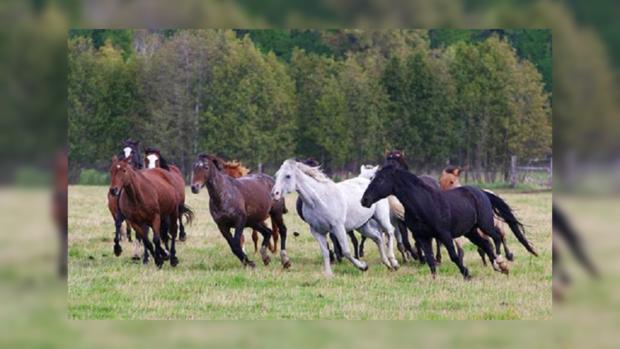 Взбесившаяся лошадь гневно набросилась нааллигатора иизбила его копытами