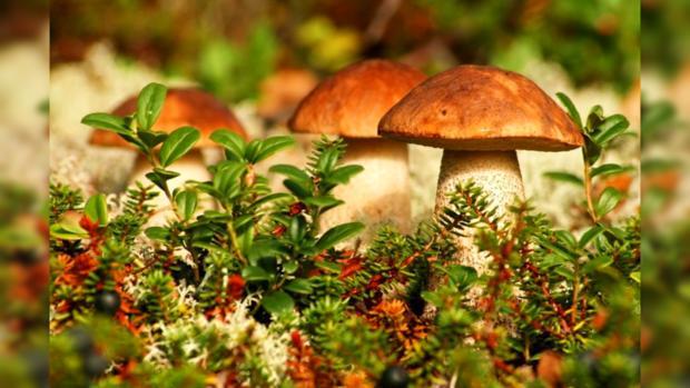 Ученые: грибы являются самыми древними многоклеточными организмами наЗемле