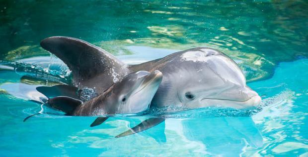 Ученые создали технологию порасшифровке языка дельфинов