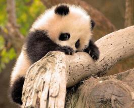 Фото животных: милые детеныши размером с ладошку