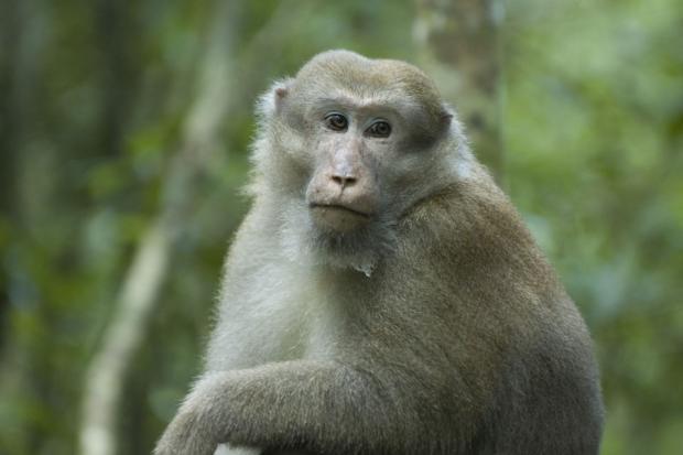 Социальные отношения помогают звериным илюдям жить дольше— Ученые