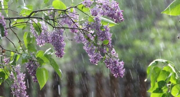 Погода в преображенке бузулукский район